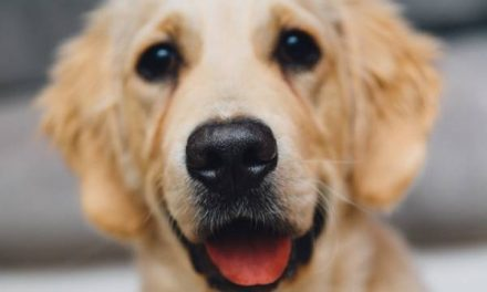The Most Popular Hunting Dog Breeds