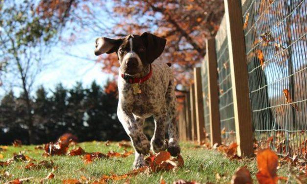 5 Best Hunting Dog Breeds