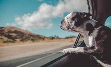 Tips on How to Travel with a Dog