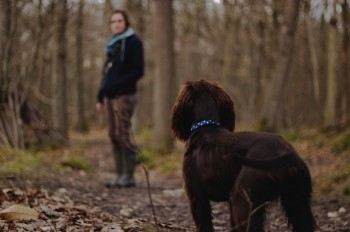 Why Walking Your Dog In The Woods Is Beneficial For The Both Of You