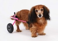 K9 Carts The Original Dog Wheelchair