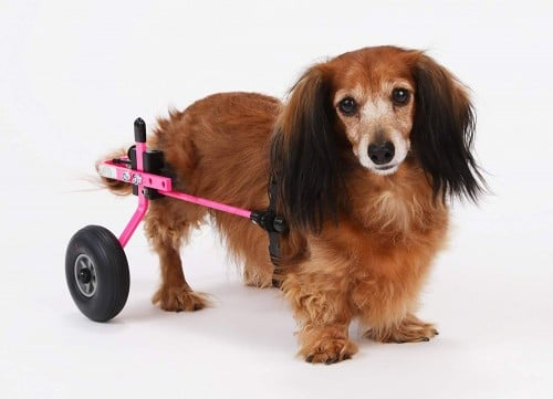 K9 Carts | The Original Dog Wheelchair
