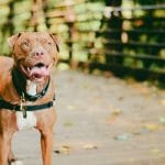 5 Most Aggressive Dog Breeds