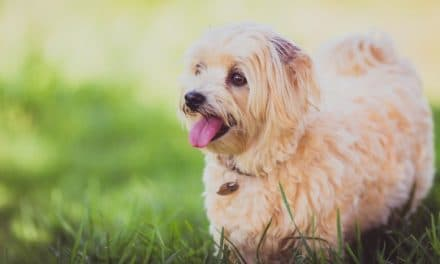 Healthiest dog breeds that don't shed