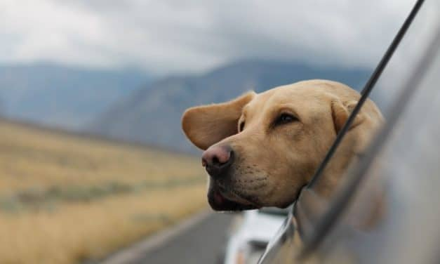 What to Pack on a Road Trip with Your Dog?