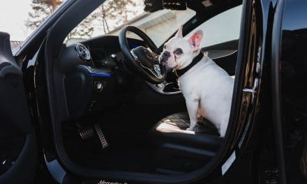 What to Do When a Dog Is Afraid of Car Rides