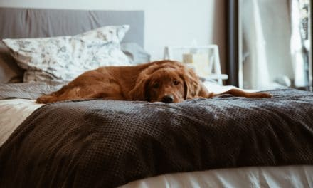Why Did My Dog Pee on My Bed?